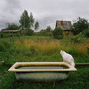 A bath for water storage. Master's cat Lancelot.